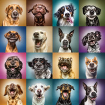 Funny Dog Faces by Manuela Kulpa