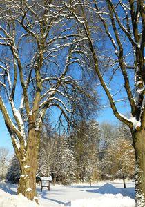 Ein kalter Wintertag von gscheffbuch