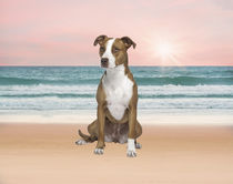 Pitbull Dog sitting on Beach von Sapan Patel