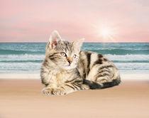 Cat Sitting on Beach von Sapan Patel