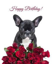 French Bulldog wishing Birthday with roses von Sapan Patel