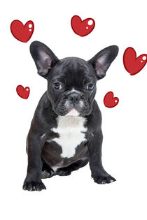 French Bulldog with Red Flying Hearts by Sapan Patel