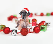 Great Dane Dog Sitting wearing a Santa Hat Christmas by Sapan Patel