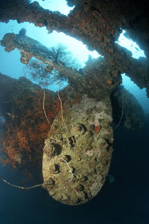 Propeller Britsh Loyalty Wreck by Norbert Probst