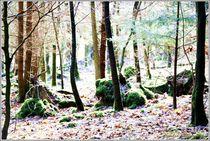 'Nature Forest Moments' von Sandra  Vollmann