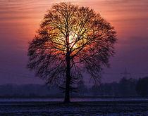 Lichterbaum von Heinz E. Hornecker