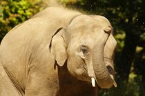 Elefant 1 by kattobello