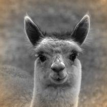 Nostalgie Alpaka von kattobello