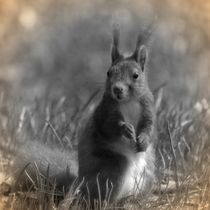 Nostalgie Eichhörnchen by kattobello