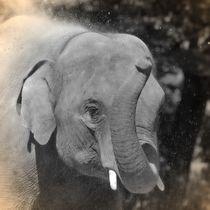 Nostalgie Elefant von kattobello