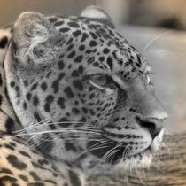 Nostalgie Leopard von kattobello