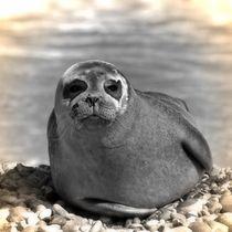 Nostalgie Seehund von kattobello