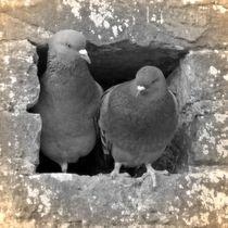 Nostalgie Tauben Liebe von kattobello