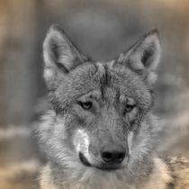 Nostalgie Wolf by kattobello