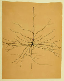 Pyramidal Cell in Cerebral Cortex, Cajal von sciencesource