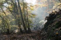 Durch den herbstlichen Wald im Wolfsgraben von Ronald Nickel