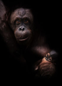 Orang - Utan mit Baby  von Stefan Mosert