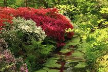 Blüten im Park! von Heinz E. Hornecker