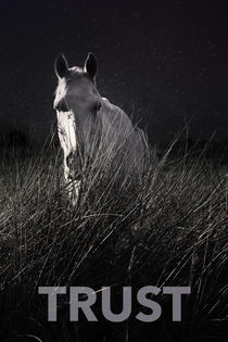 TRUST WHITE HORSE STAR NIGHT by Max Nemo Mertens