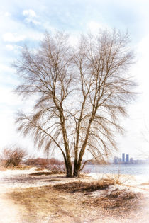 Tree close to  the Dnieper river in winter von maxal-tamor