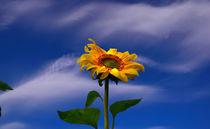 Aspiring to the sun von Yuri Hope