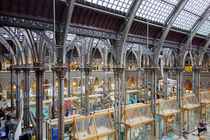 Museum of Natural History, Oxford von Hartmut Binder