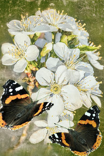 Frühlingsboten - Spring messengers von Chris Berger