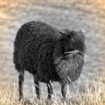 Nostalgie Schaf von kattobello