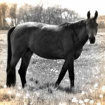 Nostalgie Pferd von kattobello