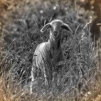 Nostalgie Lämmchen von kattobello