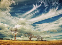 Cloudscape With Trees von Nigel Finn
