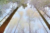 Frosty Canopy von Nigel Finn