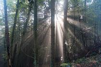 Sonnenlicht trifft Spinnweben im Wald von Ronald Nickel