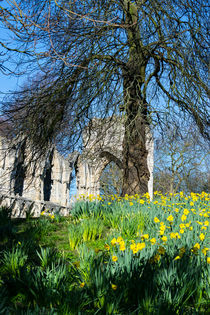 Spring in Museum Gardens by Robert Gipson