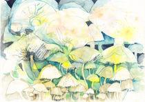 fungi by aerostato