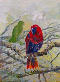 Eclectus parrot II von Geoff Amos