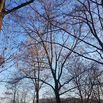 Bäume bei blauem Himmel  von Ivy Müller
