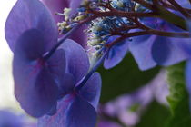 Beautiful Blue by sternbild