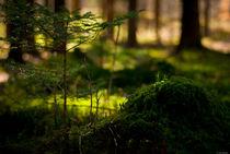 In to the wood von lynn-ba