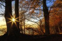 Rügen im Herbst by moqui