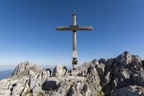 Steinfalk Gipfelzreutz von Rolf Meier