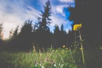 Ein kleiner Lichtblick im frühen Sommer von Susi Stark
