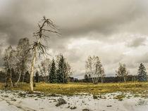 'Naturschutzgebiet Irndorfer Hardt' von Christine Horn