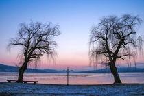 Winterabend auf der Insel Reichenau von Christine Horn