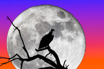 Vulture Silhouetted Against Supermoon von Graham Prentice