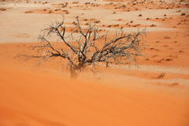 NAMIBIA ... Namib Desert Sandstorm by meleah