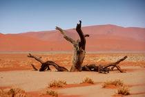 NAMIBIA ... Namib Desert Tree von meleah