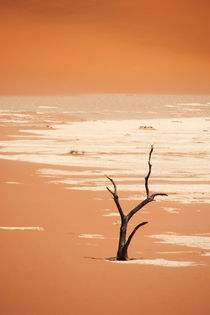 NAMIBIA ... Deadvlei by meleah