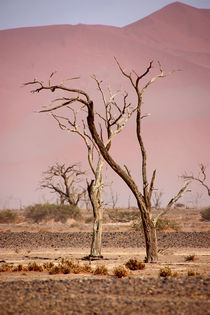 NAMIBIA ... pastel tones I by meleah