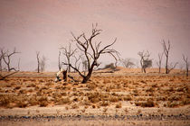 NAMIBIA ... pastel tones IV by meleah